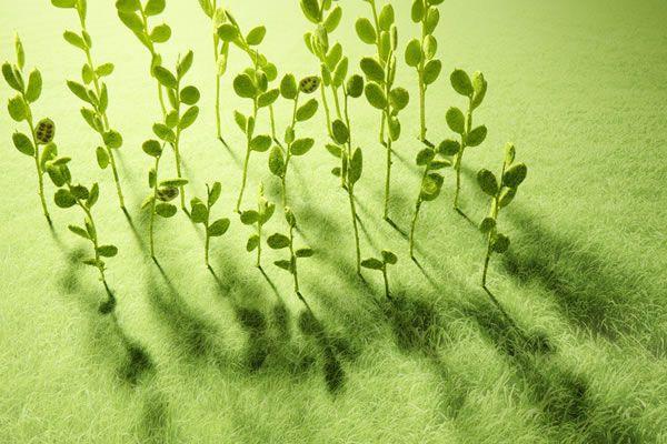 避凶化煞的植物